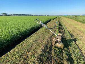 収穫間近畦畔の草刈り
